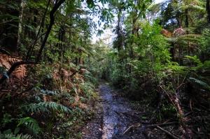 La sauvage Puketi Forest <3
