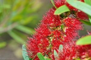 Welly-BotanicGarden-001