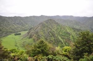 WhanganuiRiverRd-029