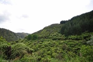 WhanganuiRiverRd-060