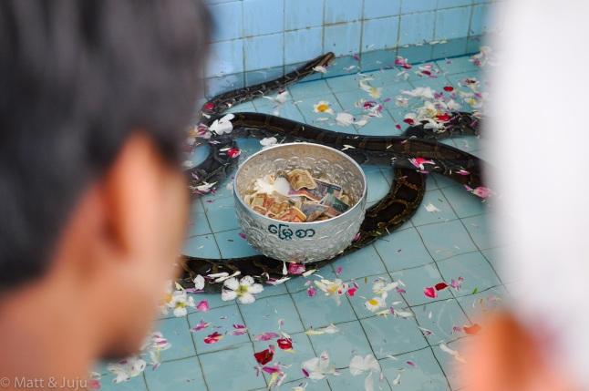 Myanmar - Mandalay - snake pagoda, donations, 2015