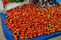 Production locale, les tomates proviennent des jardins flottants.