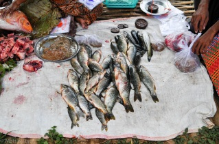 Un lac réputé pour ses pêcheurs, on devait s'attendre à y trouver du poisson ...